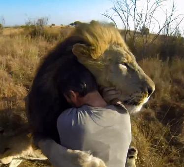 Kevin Richardson et lion hug