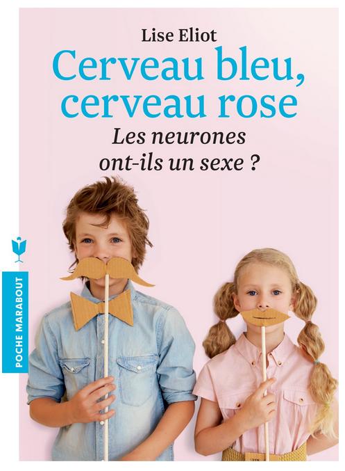 cerveau rose cerveau bleu