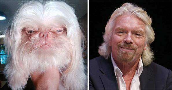 chiens qui ressemblent à des célébrités