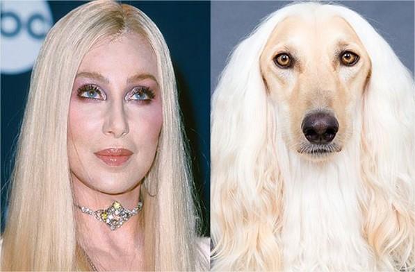chiens ressemblent celeb