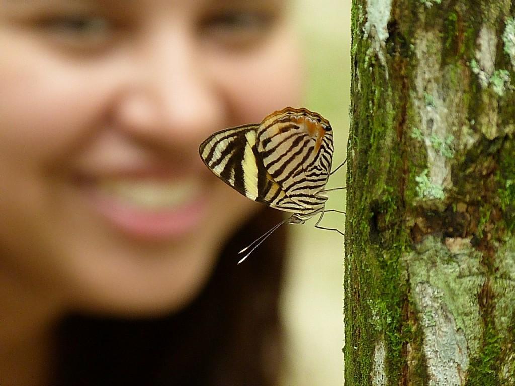 butterfly-314388_1280