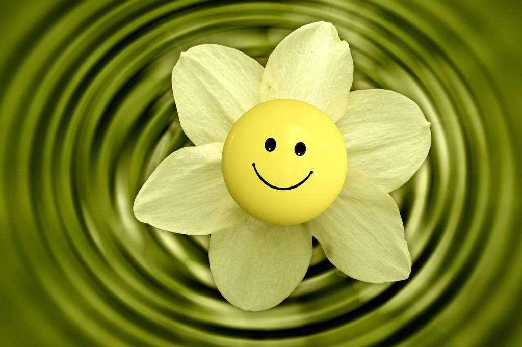 flower-233838_1280