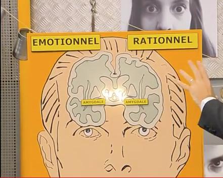 effet de l'amour sur le cerveau