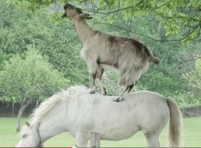 L'esprit de coopération existe aussi chez les animaux