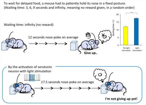 sérotonine patience