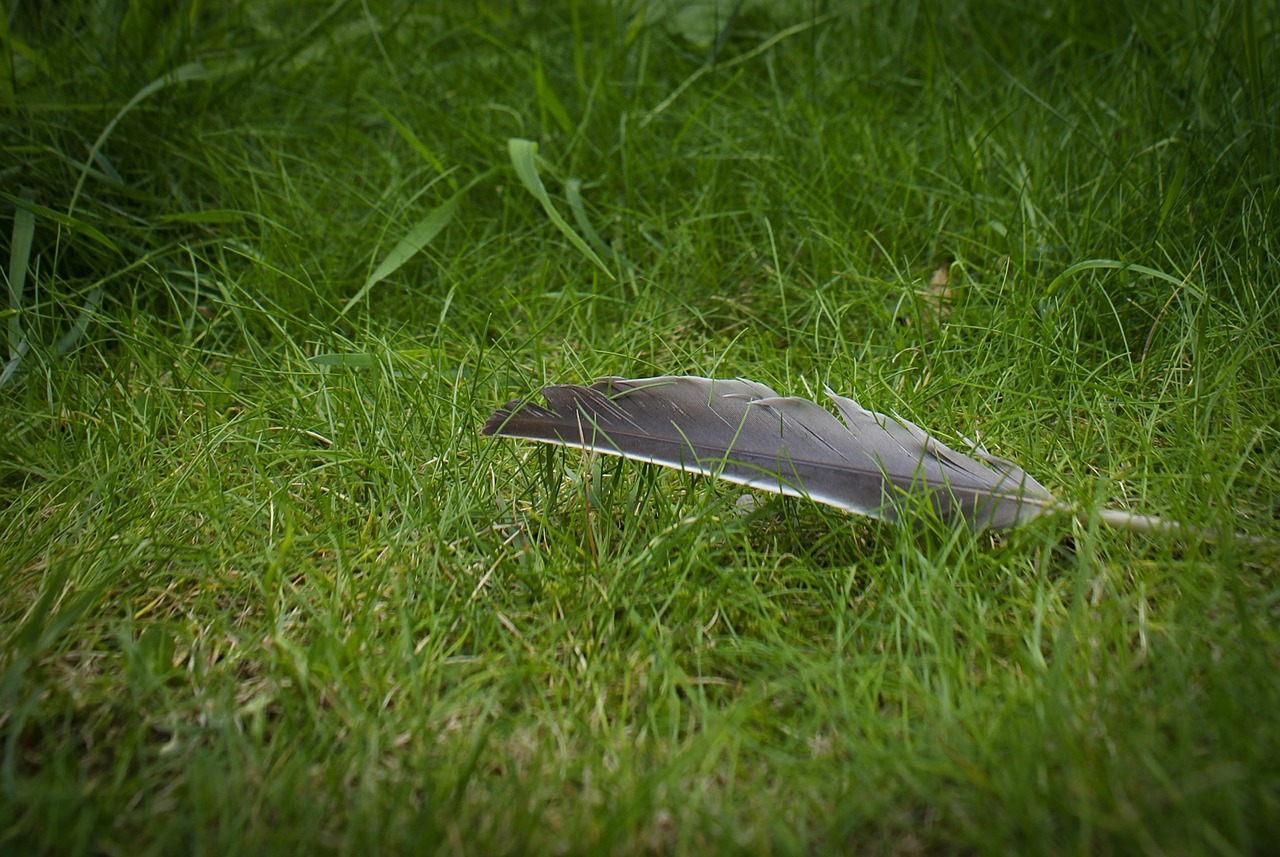 feather-558131_1280