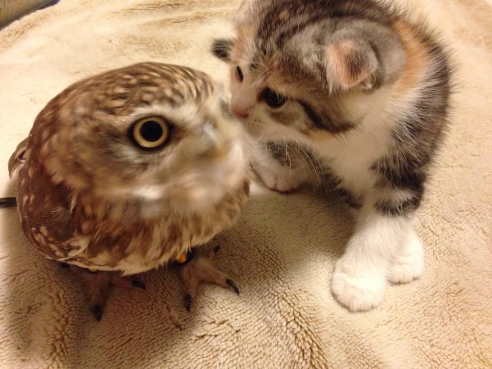 chat et chouette