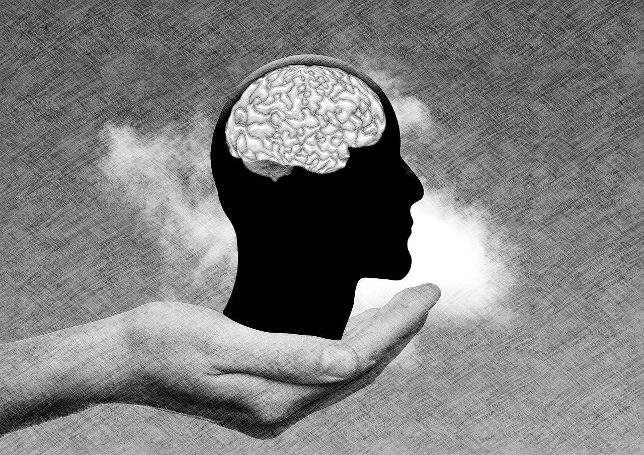 cerveau et dessin