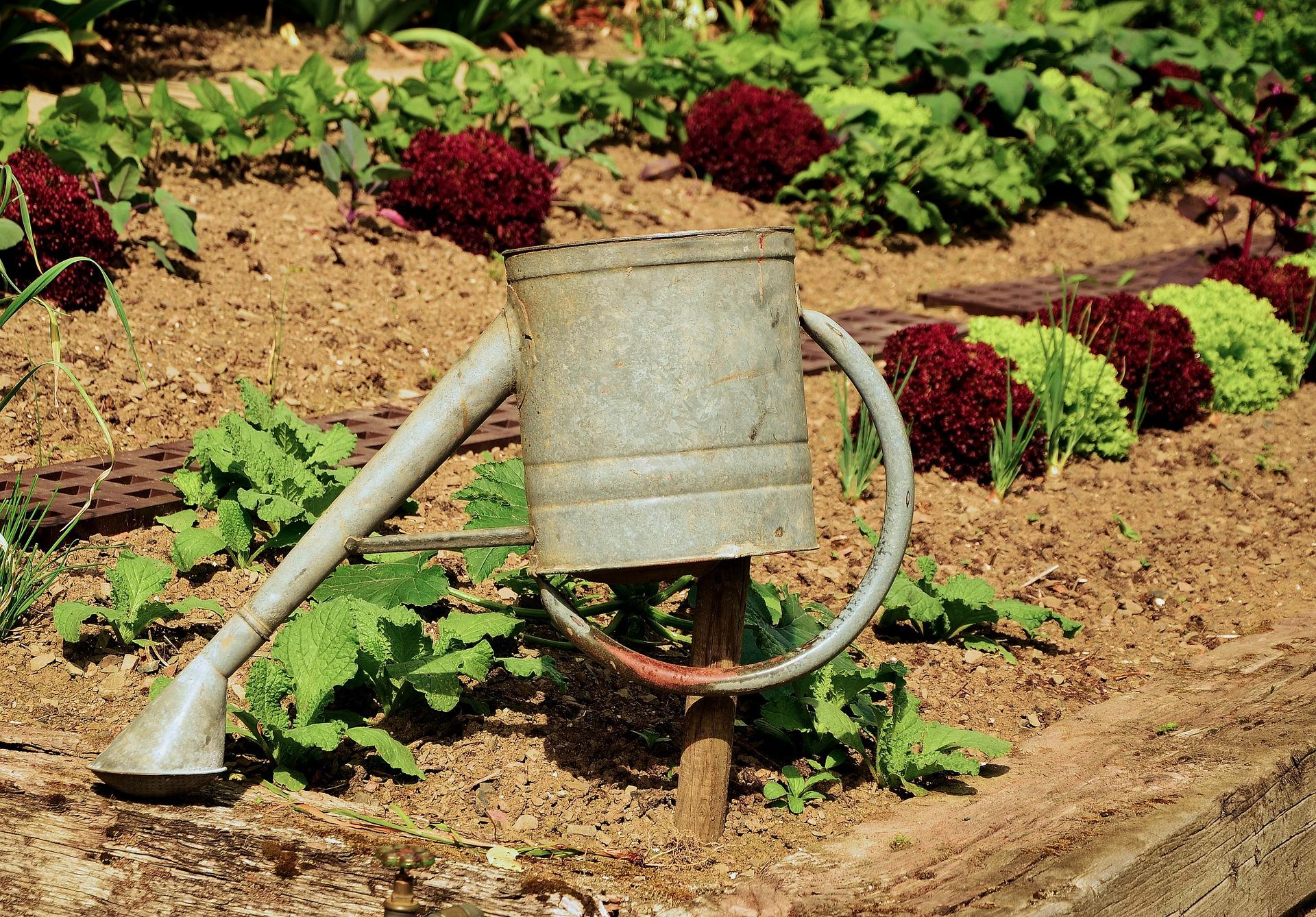 garden-1033574_1920