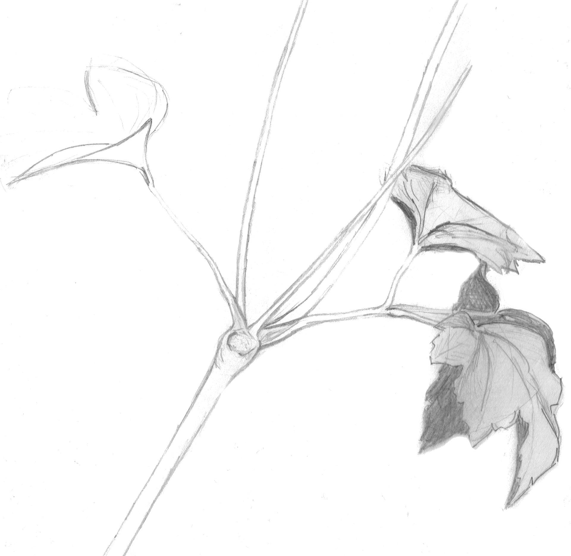 plant-909413_1920