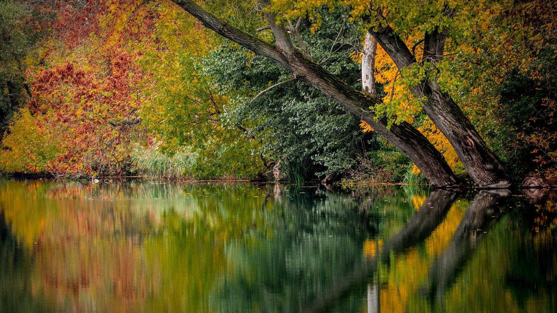 autumn-994897_1920