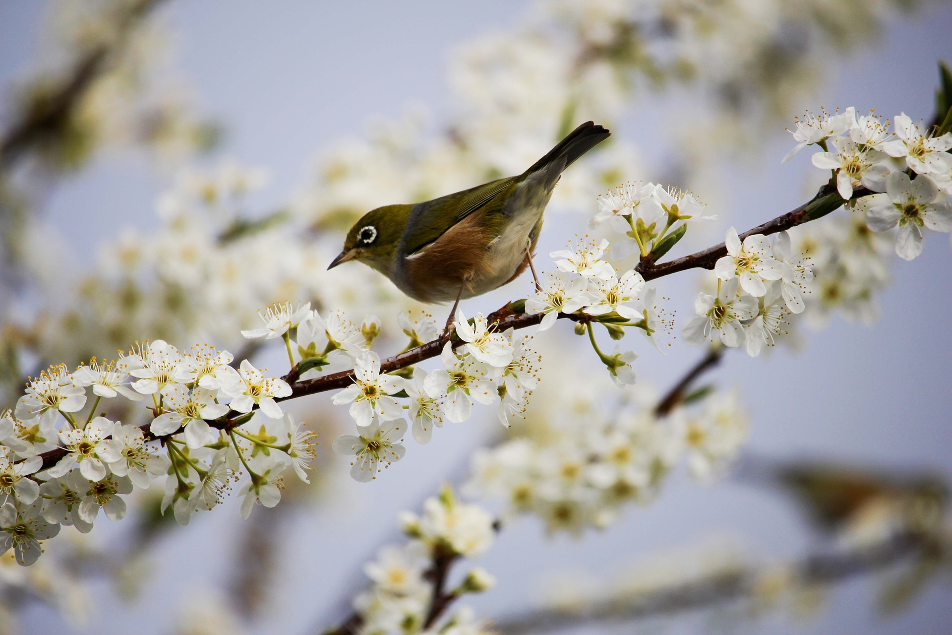 blossom-1324088_1920