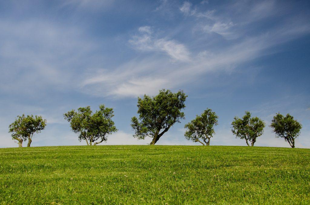 trees-790220_1920