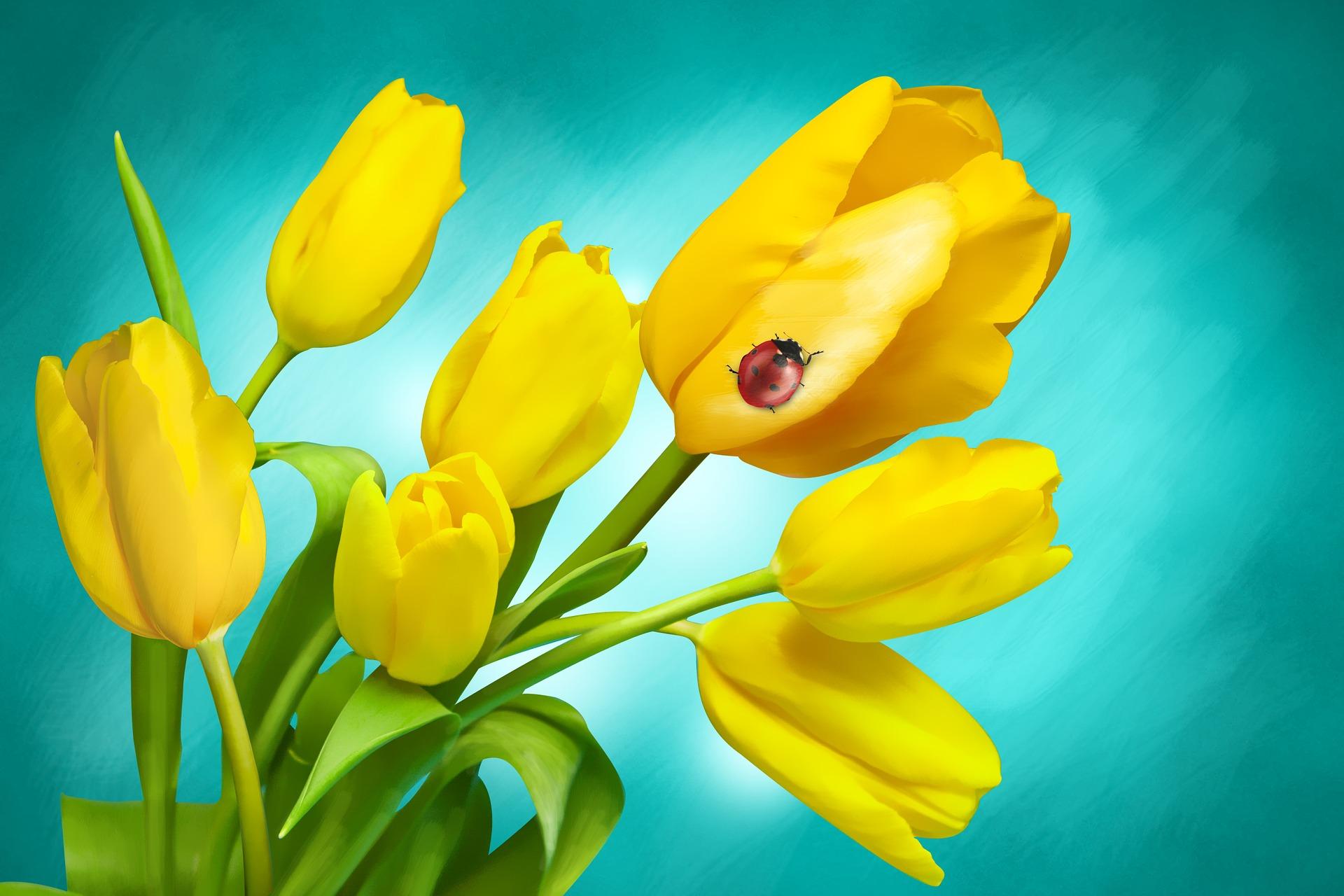 flowers-1018499_1920