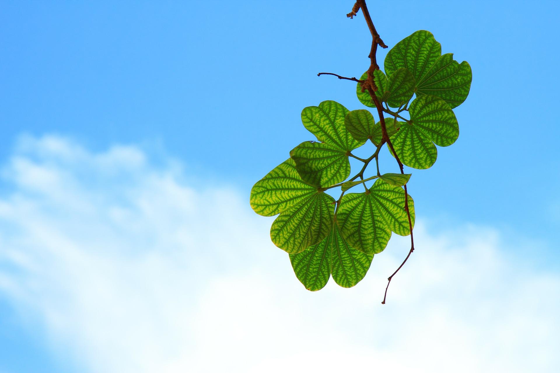 leaves-15757_1920