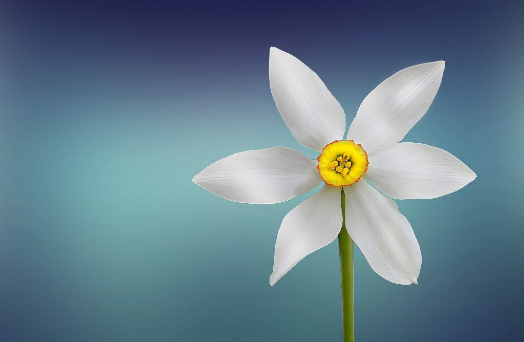 flower-729513_1920-2