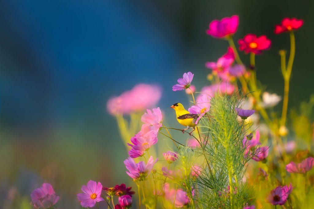 flowers-1835619_1280