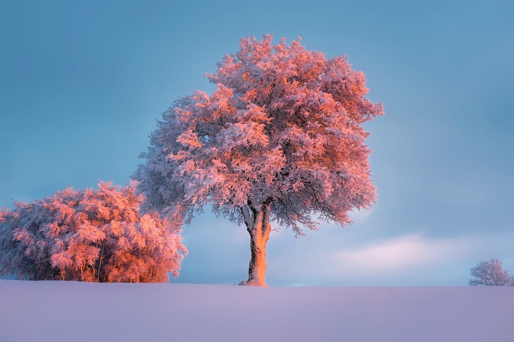 winter-1835616_1280